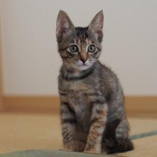 お茶目なキジ猫ランちゃん