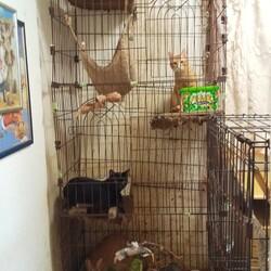多頭飼育崩壊 約40匹の猫