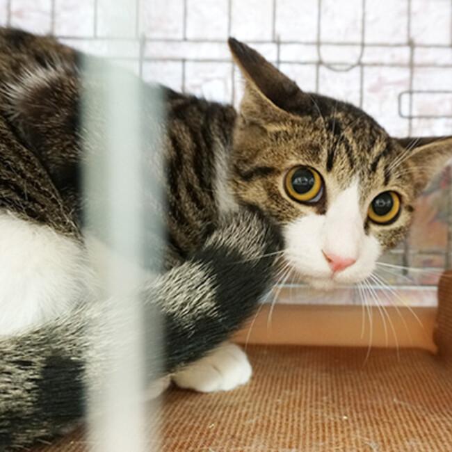 西東京市 地域猫の会のカバー写真