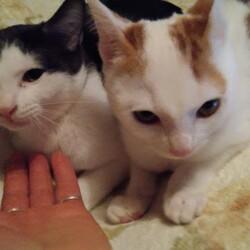 保護猫活動