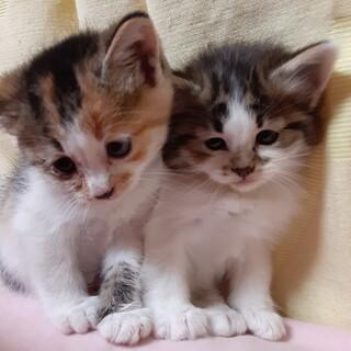 可愛い子猫たち