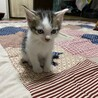 【急遽⠀】子猫の里親募集