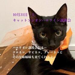 ハロウイン*黒猫と兄弟たちの譲渡会*