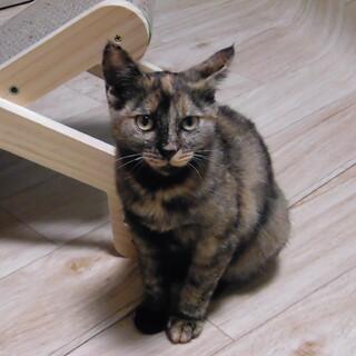 クリクリお目目のサビ猫ちゃんです
