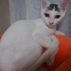 板橋区猫の譲渡会