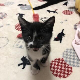 2か月♂子猫