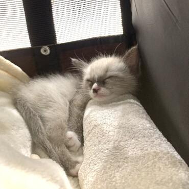 生後1ヶ月。動物病院の待ち時間に爆睡中