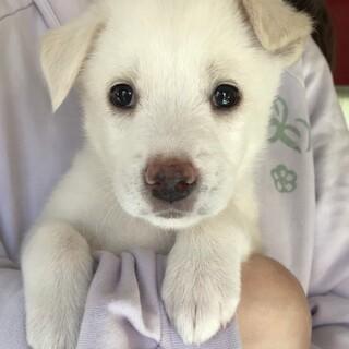 MIX子犬の女の子 茜(あかね)ちゃん