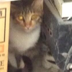 新たな保護猫さん(^_^;)