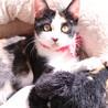 三毛猫メス♪ 4ヶ月位