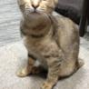 超人懐こいサビ猫ちゃん★ベタ慣れです!