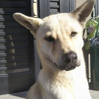 周南市 保護犬 飼い主様探しています。