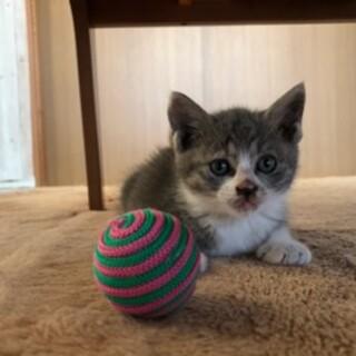1カ月半 子猫『リサ』