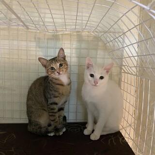 世界遺産姫路城に捨てられた猫