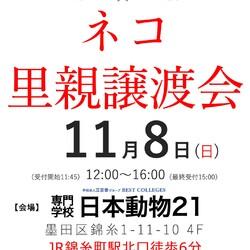 東京 錦糸町でネコの里親譲渡会(11:45〜受付開始)