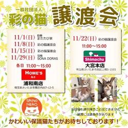 彩の猫☆譲渡会 IN 島忠ホームズ浦和南店