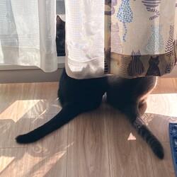「最近の悩み」サムネイル3