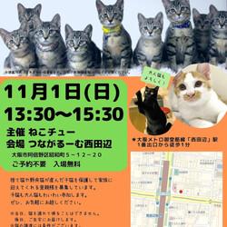 「11/1ねこチュー里親会 参加猫」サムネイル1