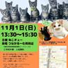 11/1ねこチュー里親会 参加猫