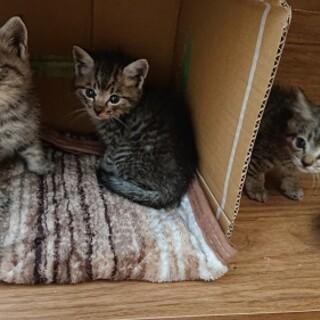 生後1カ月、生後5ヵ月の子猫の里親募集!