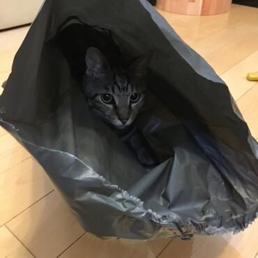 袋の中に隠れて、敵(しゅう)が来るのをじっと待つ海。攻防戦が始まろうとしている。笑