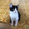 保護子猫のトライアル