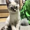 元気いっぱい✩ 8月9日生まれの仔猫