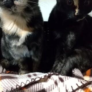 サビ猫姉妹(すももちゃん、つむぎちゃん)