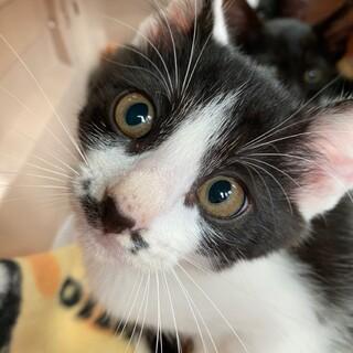 【チョビヒゲ猫】甘えん坊の男の子