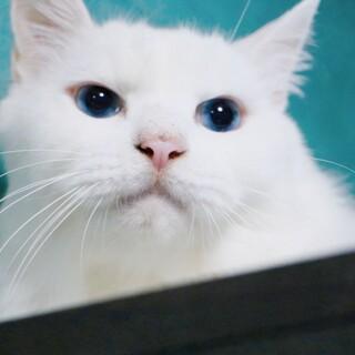 吸い込まれそうなブルーの目セレーネ