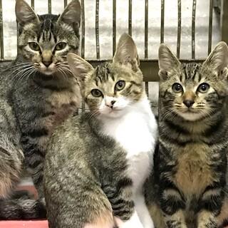 仲睦まじい親子3匹キジトラ母と2兄妹