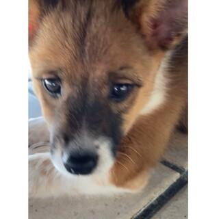 お目々がまん丸の明るい美犬ちゃんです