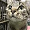 可憐なキジトラ母猫と2匹の子猫たち