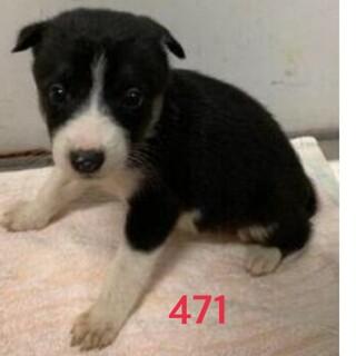 たくさんの子犬が収容されています。471、473