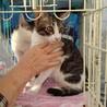 お目目クリクリの兄妹猫♪2匹一緒に貰ってください。
