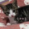 保護猫を家族に迎えて下さい✩°。⋆