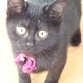 黒猫ちゃん!生後3ヶ月✨女の子