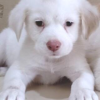 【センターレスキュー】真っ白綺麗な男の子