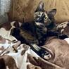 個性的なサビ猫ちゃん
