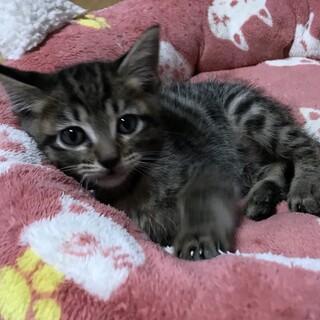 保護猫を家族に迎えて下さい✩.*˚