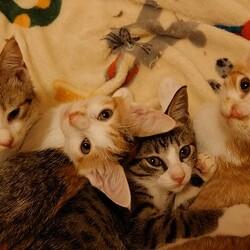 長崎ねこの会猫の譲渡会