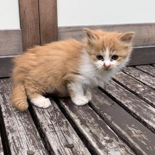 もふもふ子猫募集中!!