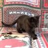 とても元気な。生後三ヶ月の黒猫、女の子2匹です。 サムネイル3