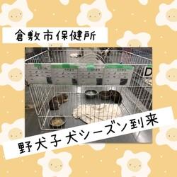 倉敷市保健所、野犬子犬シーズン到来