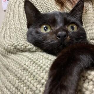 2ヶ月 人懐こい黒猫ちゃん