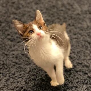 生後約1ヶ月子猫ちゃんの里親さん募集