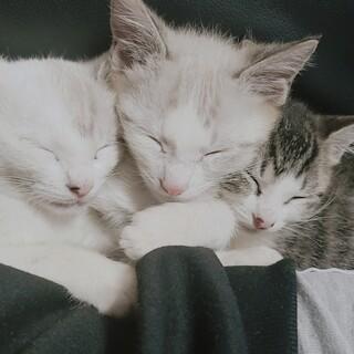 7月27日産まれ 3匹兄妹