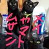 保護猫達を新しい里親へ(2)