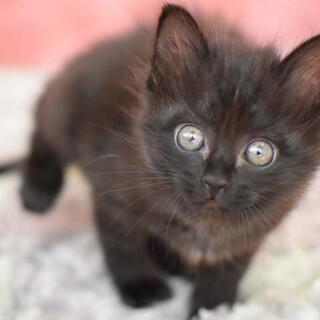 ふわふわ黒猫のかりんちゃんです。