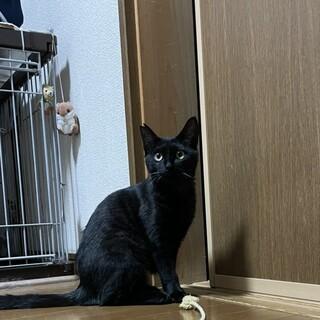 可愛い黒猫お留守番可